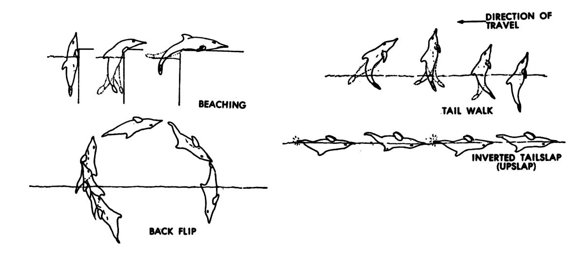 Creative Dolphins
